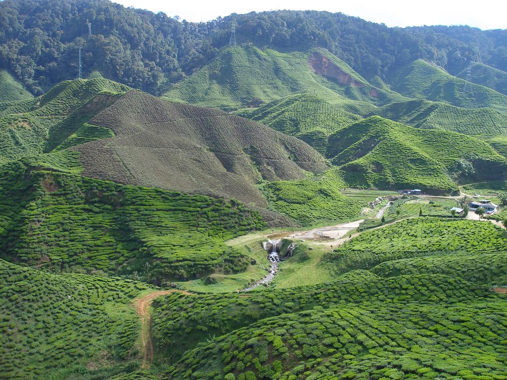 Bukit-Larut-Malaysia