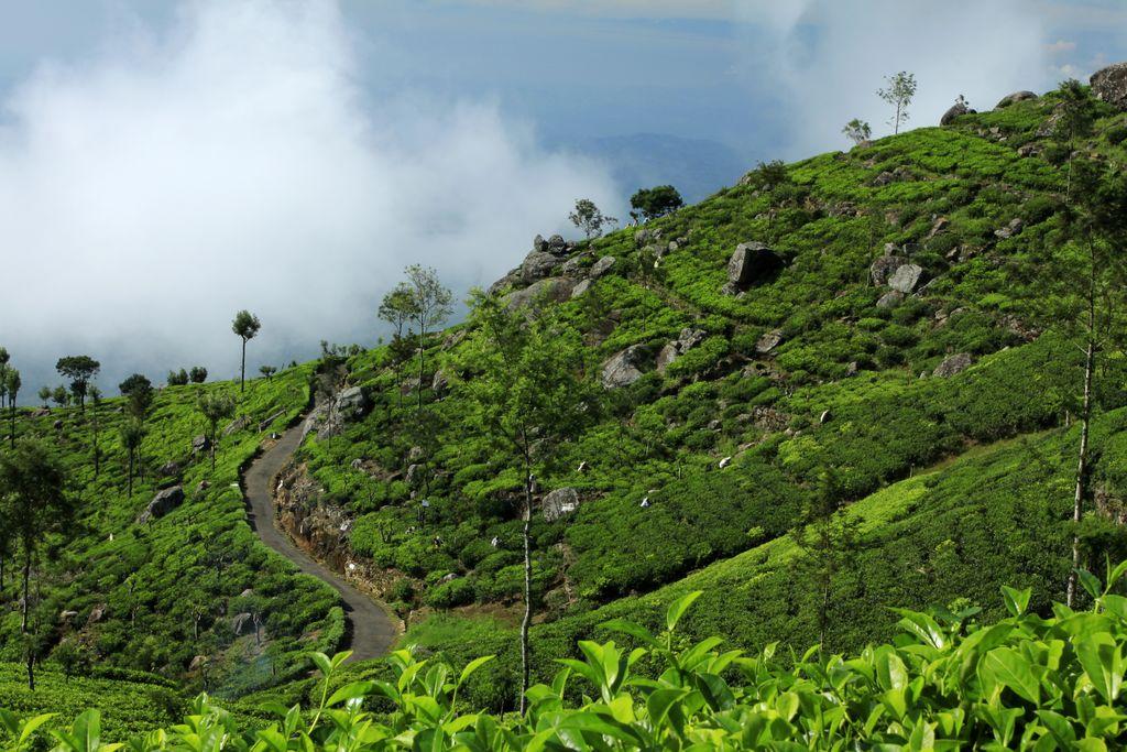 Haputale-Sri-Lanka