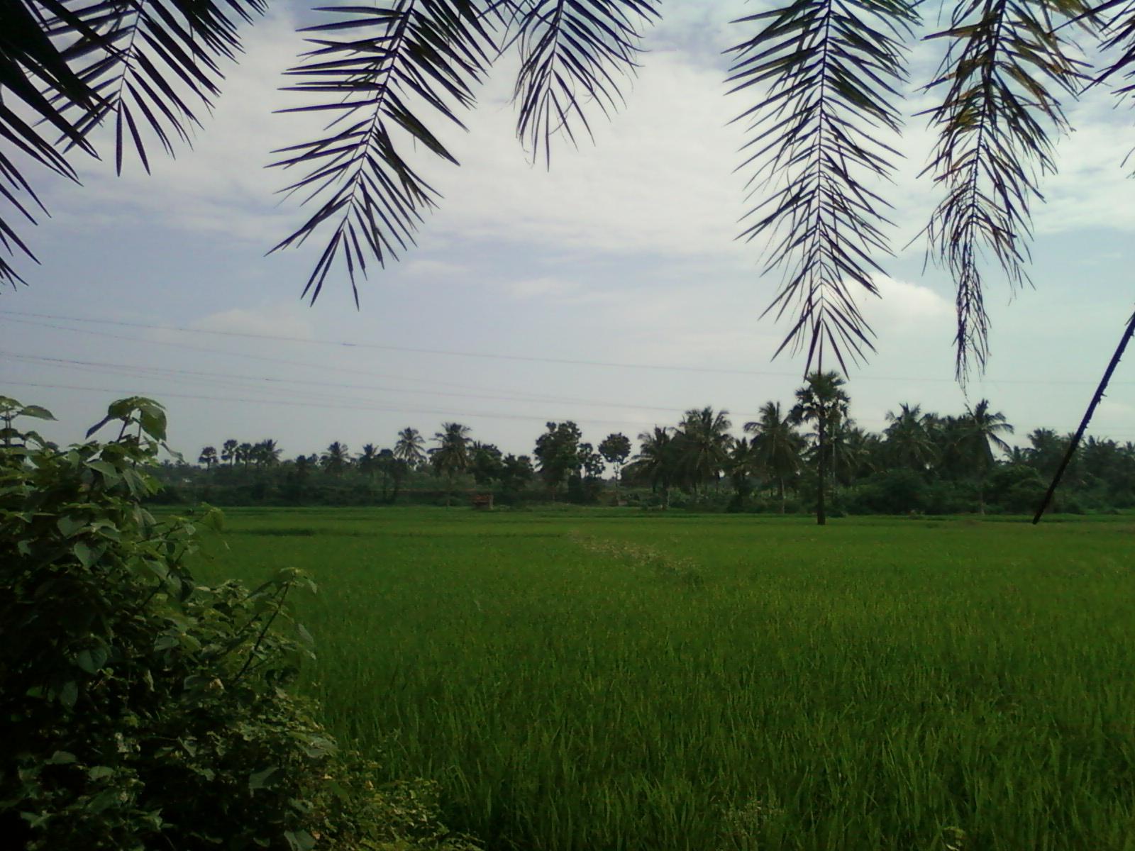 Konaseem, Andhra Pradesh