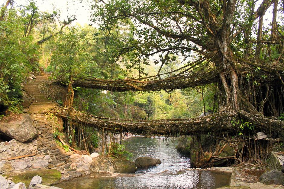 Living-Root-Bridges-of-Cherrapunji