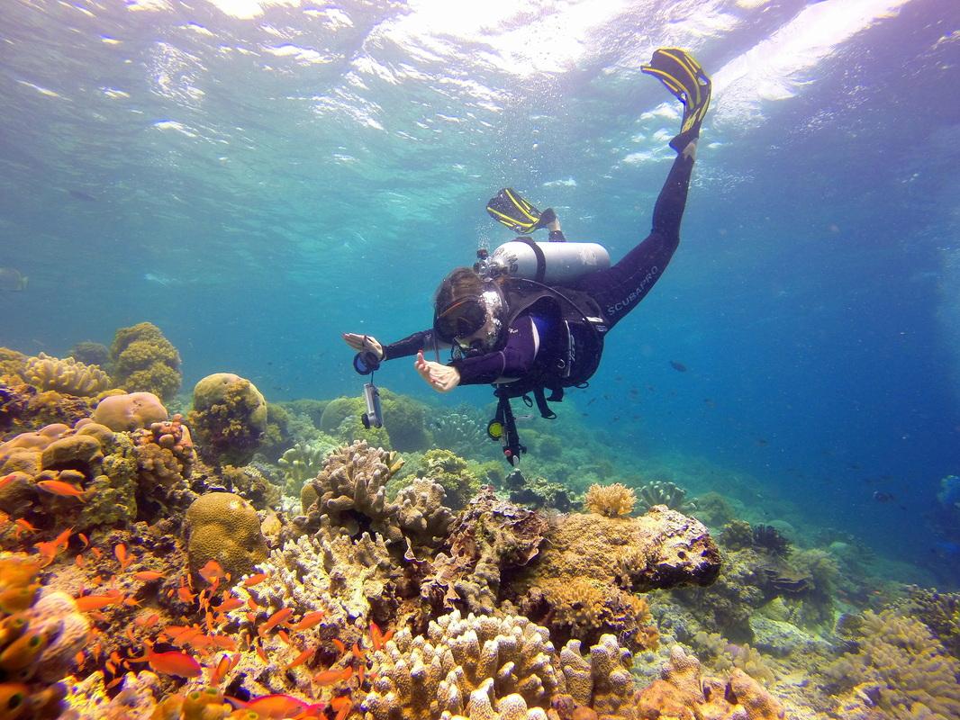 Unexplored getaways sipadan islands travel blog - Sipadan dive sites ...