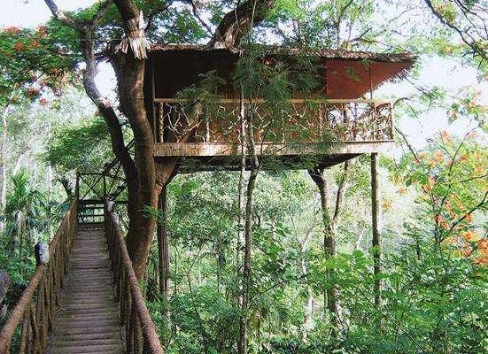 Wild Canopy Nature Reserve, Masinagudi