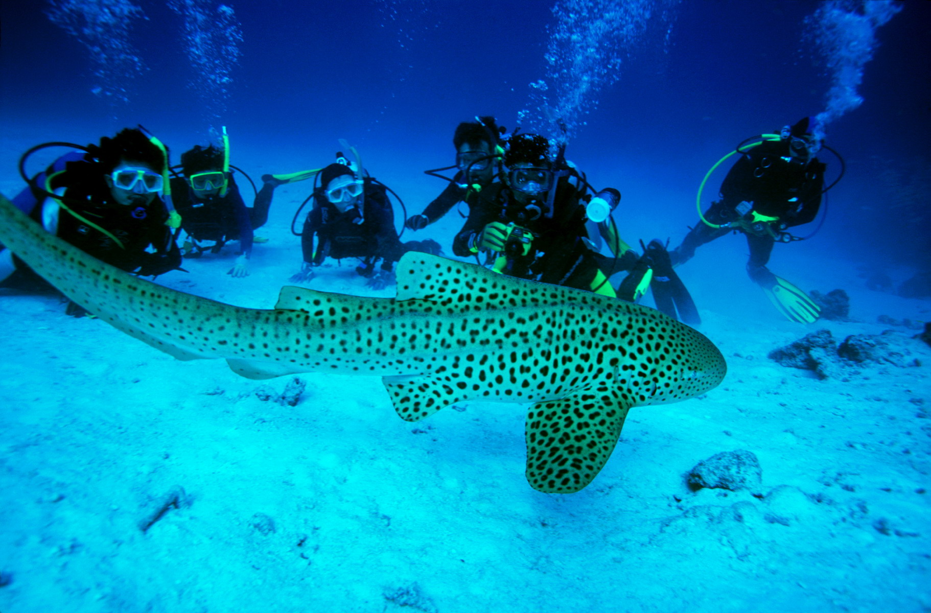 scuba-diving-in-the-Andamans