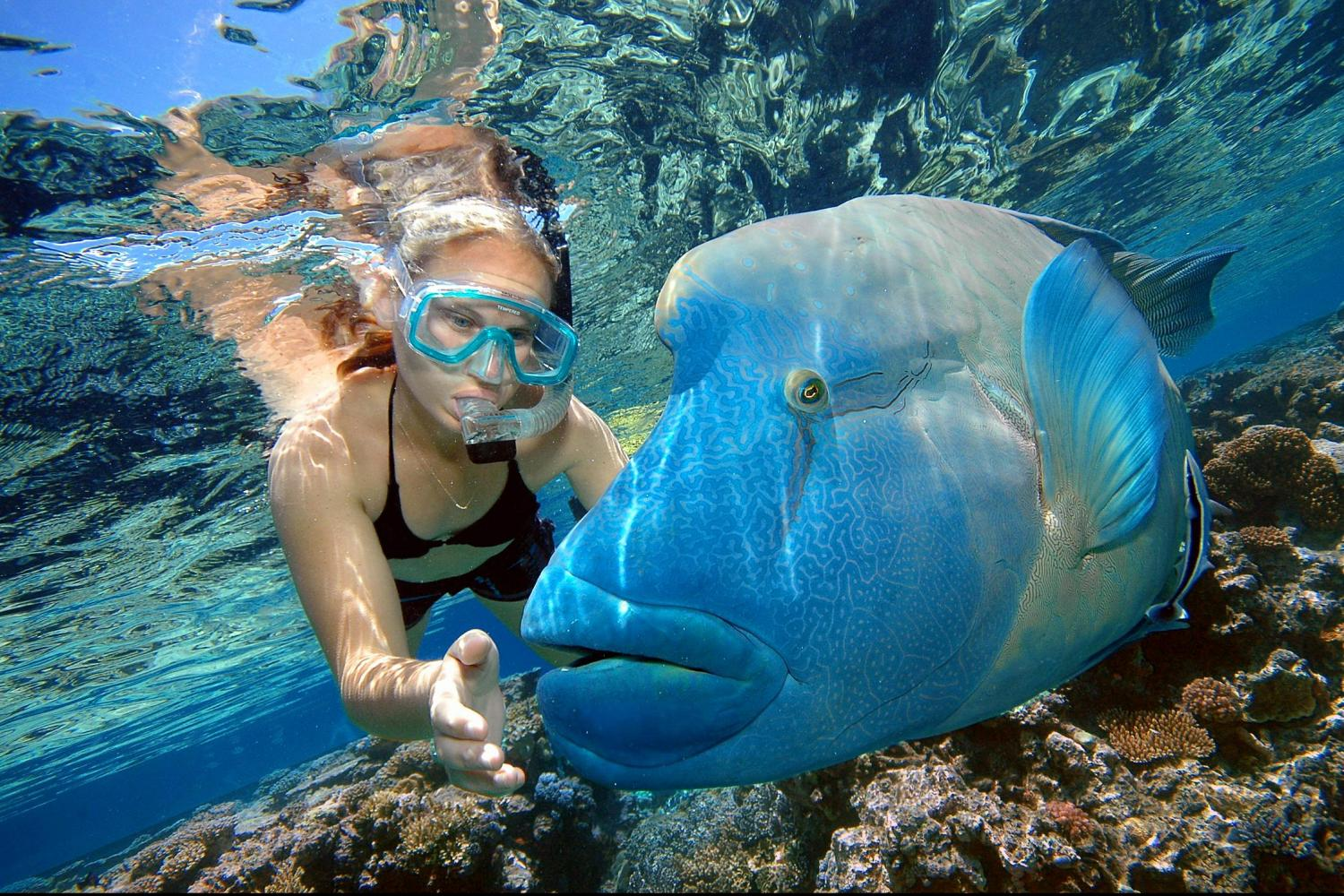 Best Underwater Experiences in the World