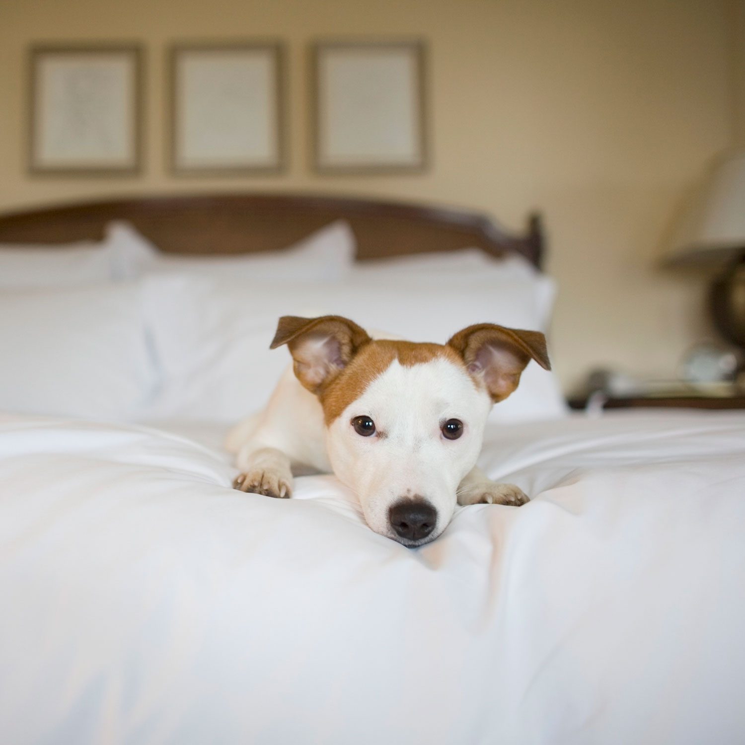 Top Pet Friendly Hotels in India